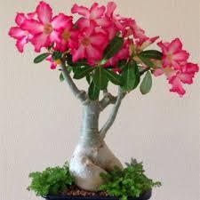 deco jardin a faire soi meme vasque fleurs jardin jardinière muret de fleurs avec de vieux