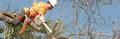 tree trimming naperville t m tree and snow removal service