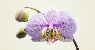 flower orchid types of orchids a visual compendium