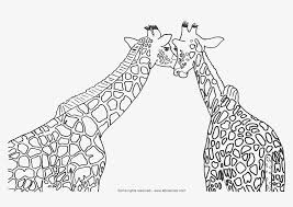 giraffe coloring pages u2013 pilular u2013 coloring pages center