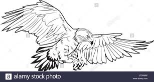 bald eagle stock vector images alamy