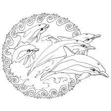 coloriage magique dauphin Coloriage  animaux marins  Pinterest