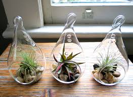 hanging air plant hanging air plant terrariums set of 3 airy teardrop designs