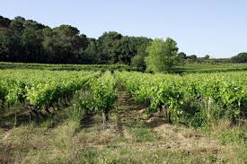 Family Gard Free Images Vineyard Field Farm France Europe Crop Soil