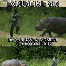 Google Plus Meme - google plus sends the hippos out to recruit in africa