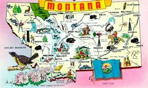 State Flower Of Montana - what is the state flower of montana quora