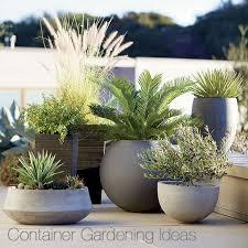 Planter Gardening Ideas Container Garden Ideas Crate And Barrel Planter Gardening