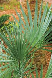 native plants of florida 10 drought tolerant native plants southern living