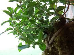 how to plant a kokedama string herb garden diy gardening save