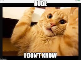 Idk Meme - idk cat imgflip