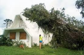 tree impact u0026 snow load aidomes