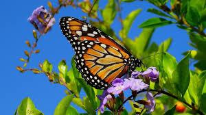 wallpapers butterflies and flowers vector flower butterfly dots