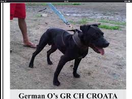 american pitbull terrier apbt abpt and other names pit bull chat forum