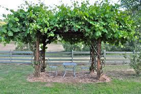 Garden Arch Plans by Image Detail For Grape Arbor Pergola Grape Arbor Pinterest Diy
