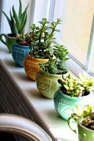 Window Sill Inspiration Amazing Of Window Sill Plants Inspiration With Top 25 Best Window