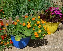 Vegetable Garden In Pots by Vegetable And Flower Containers Ramblings From A Desert Garden
