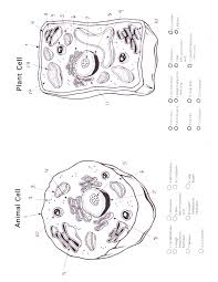 animal and plant cells coloring worksheet animal cell coloring