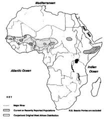 domestic horses of africa scientific american blog network