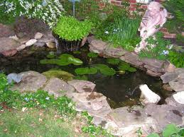 Backyard Pond Ideas With Waterfall Goldfish Ponds U0026 Water Gardens The Pond Doctor