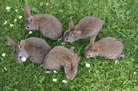 raising rabbits for dummies farming style