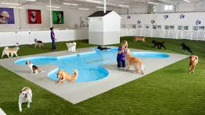 kennedy airport u0027s ark terminal aims to make pet travel safe and