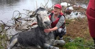 donkey rescued from flood says thank you with toothiest grin