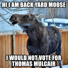 Funny Canadian Memes - le new meme canadian back yard moose who would not vote for