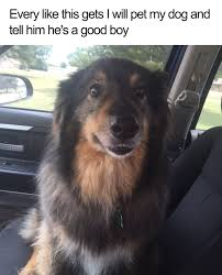 Happy Dog Meme - 20 dog memes that will definitely put a smile on your face