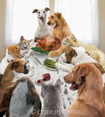 thanksgiving dinner with cats and dogs