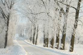 country road leading among frosted trees on a morning stock
