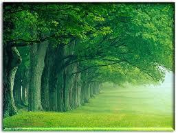 trees and us wonders of pakistan