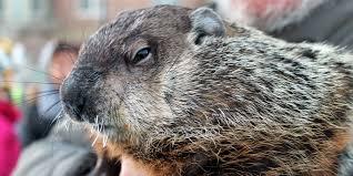 groundhog bites wisconsin mayor ear