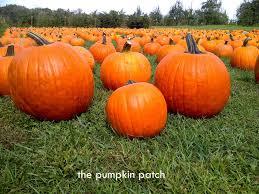 fall pumpkin wallpaper pumpkin patch
