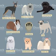 simple silhouettes of dogs types of minidogs in flat design stock