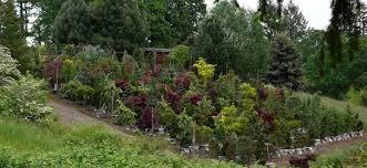 nursery profile oregon small trees oregonlive