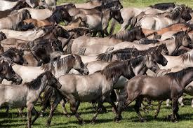 Haus Rasche Bad Sassendorf Dülmener Pferd Wikiwand