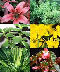 common house plants that are toxic to pets aspca apartment therapy