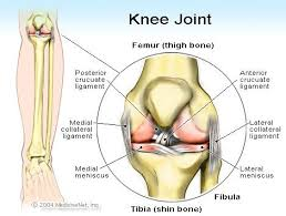 Back Knee Anatomy Torn Acl Recovery Time Symptoms U0026 Surgery