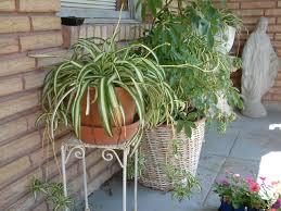 Different Types Of Gardens Garden Design Garden Design With Types Of Plants Various Types