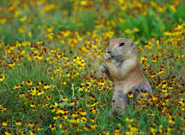 How Do The Eastern Lowlands Differ From The Interior Lowlands What Is A Prairie Wonderopolis