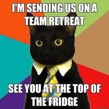 Newspaper Meme Generator - cat reading newspaper meme generator segerios com segerios com