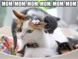 Mommy Memes - fabulous friday fun thread mommy memes