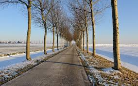 Way To Winter Winter Tree Lined Road Wallpaper Allwallpaper In 16142 Pc En