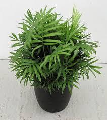 Small Desk Plants by Beauteous 50 Low Maintenance Office Plants Decorating Design Of