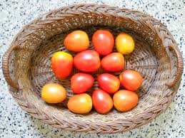 red ripe tomatoes grow your own rooftop tomatoes a guide for the