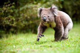 imagenes animales australia fauna extrema animales que veras si vas a australia imágenes