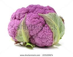 purple cauliflower stock images royalty free images vectors