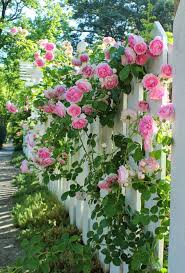 flowers in garden images 25 trending picket fence garden ideas on pinterest rustic