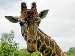 tripadvisor u0027s top zoos in the usa