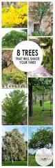 Backyard Trees For Shade - all about shade trees ideas trees and shades